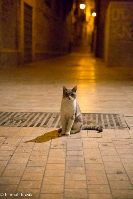 Who is your mom?  Malaga cat wandering.