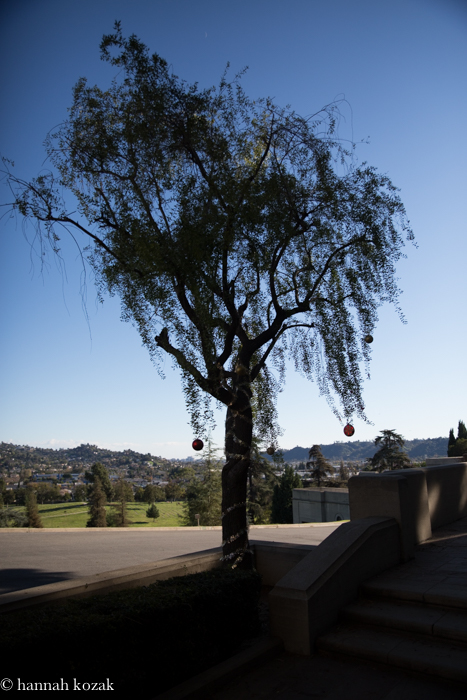 Forest Lawn tree