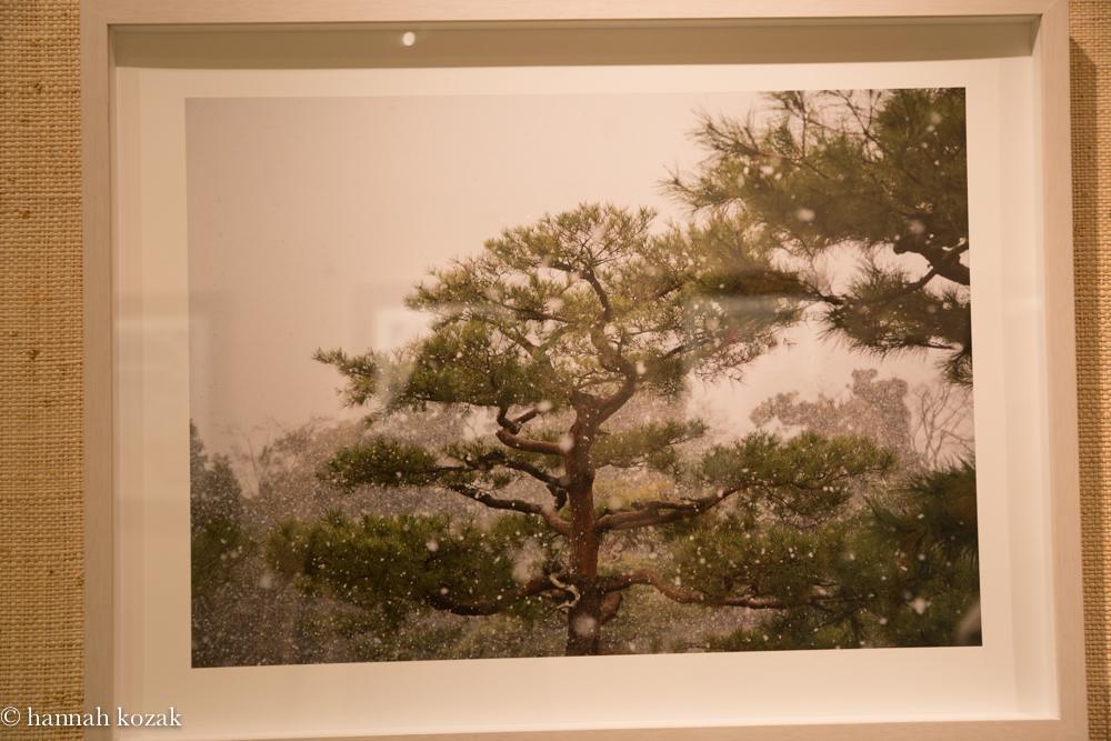 Sandra Klein: Snake Tree Archival Pigment Print 2014